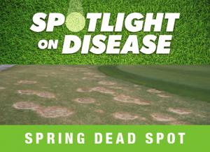 Spring Dead Spot
